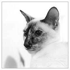 """фото """"Портрет домашнего животного"""""""