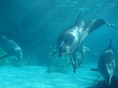 А так же сдесь можно подрабатывать,кормя и ухаживая за дельфинами.