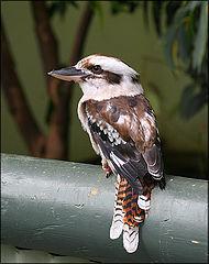Птах.  - Раздел животные - Фотография