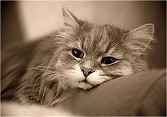 """photo """"Feel sad ..."""""""