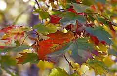 "photo ""Beautiful autumn farewell."""