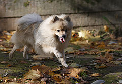"""photo """"Laughter Spitz."""""""
