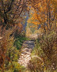 """photo """"Path in the autumn."""""""