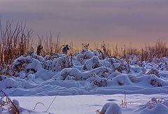 "photo ""Winter morning."""