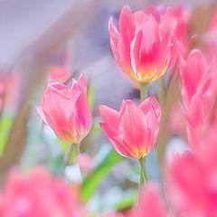 """photo """"Pink tender"""""""