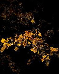 """photo """"Hiding Autumn Night."""""""