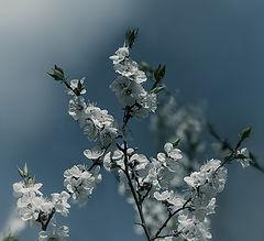 """фото """"Разбуди меня, когда придёт весна..."""""""