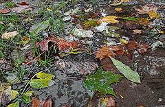 """photo """"chaos Autumn"""""""