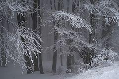 фото Зимняя графика