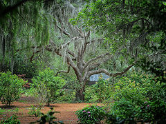 фото Live Oak BrookGreen Gardens South Carolina