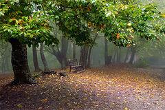 фото Про осень