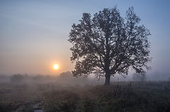 фото Туманный рассвет