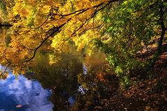фото Расплескала краски осень...