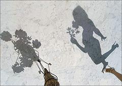 фото Игра теней