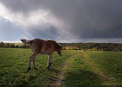 фото Сельский этюд