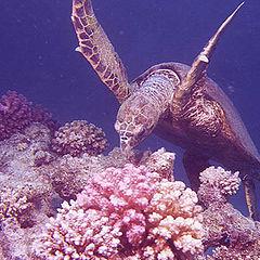 """фото """"подводная странница"""""""