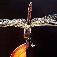"photo ""Dragon Fly"""