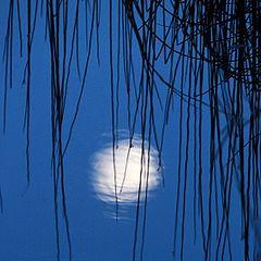 """фото """"Moon Shadow"""""""