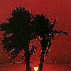 "photo ""Palm Trees"""