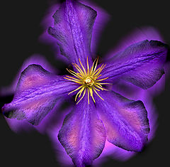"photo ""Soul of the Clematis"""