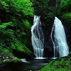 "фото ""Forest Treasure"""