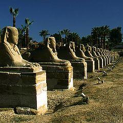 """photo """"Sphinx"""""""