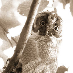 """фото """"Эти глаза напротив..."""""""