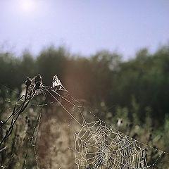 "фото ""Web"""