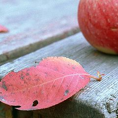 "фото ""Apples"""