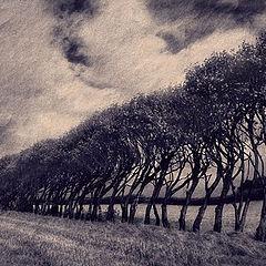 """photo """"Endless Trees"""""""