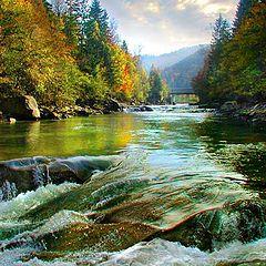 "фото ""Series ""Gold of Carpathian mountains"" - Yaremcha"""
