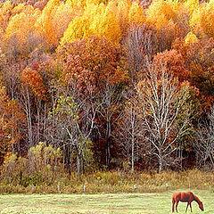 """photo """"Autumn Seen...."""""""