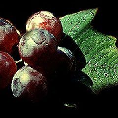 "фото ""Red Grape"""