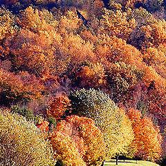 """photo """"Autumn Lane...."""""""