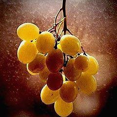 "фото ""Wine Grape"""