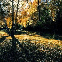 "photo ""The fall"""