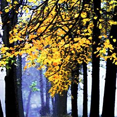 "photo ""The gold of autumn`s morning"""