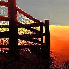 """фото """"Tequila Sunrise"""""""