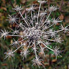 """photo """"Autumn`s Snowflake"""""""