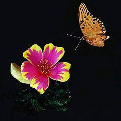 """фото """"A Butterfly Approach"""""""