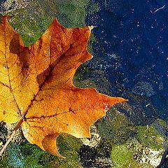 """photo """"Leaf on Table"""""""
