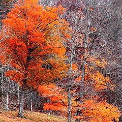 """photo """"""""Hangin` On.....to Autumn"""""""""""