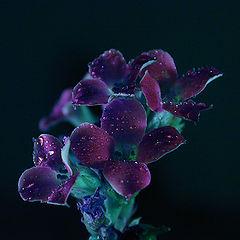 "photo ""Night Flowers"""
