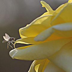 "photo ""Baby Bee."""