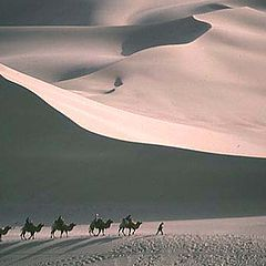 """photo """"Camels in the Taklamakan Desert"""""""