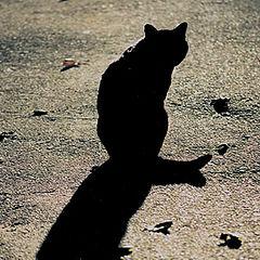 """фото """"Тень черного кота"""""""