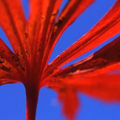 "photo ""red sun"""