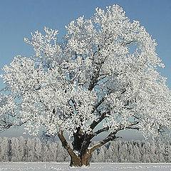 """photo """"Monarch in Winter"""""""