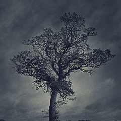 """photo """"Lonely Tree in the night"""""""