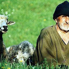 "фото ""Transsylvanian shepherd"""